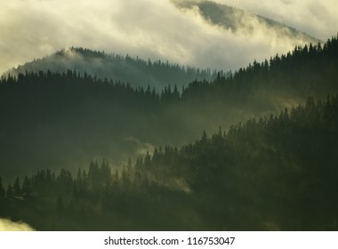 Foggy Carpathian forest after rainy night