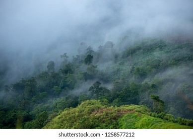 foggy clouds over forest
