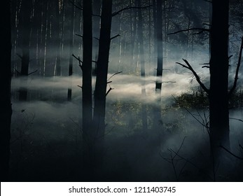 foggy and dark woods at night, mystery  forrest