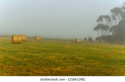 Foggy dawn in Warrnambool, Australia.  Beautiful morning light.