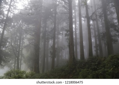 Foggy day at Alishan National Forest Recreation Area ,Alishan, Taiwan