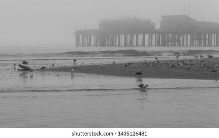 Foggy day at Capitola Beach, CA