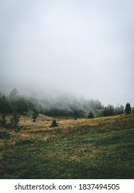 Foggy day on the mountain in Serbia. Moody day on the meadow of the Tara mountain. - Shutterstock ID 1837494505