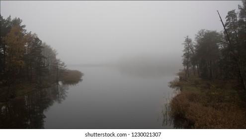 foggy day in the wild nature in november