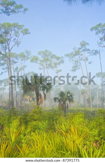 foggy-early-morning-corkscrew-swamp-600w