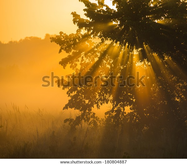 Foggy early morning sunrise in the forest, the sun's rays.