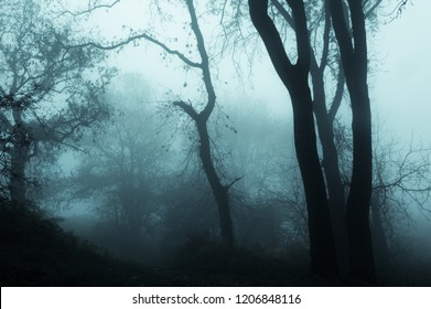A foggy eerie forest on a foggy winters day with a muted edit