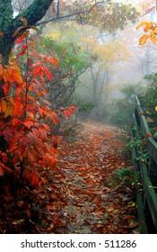 foggy fall path