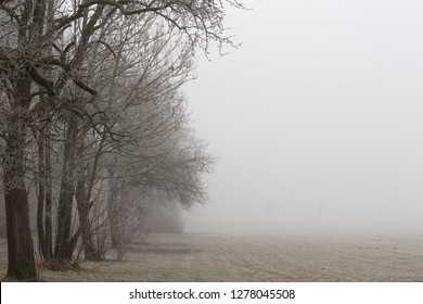 Foggy field with frost covered trees on the left margin and copy space on the right