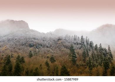 Foggy Forest at Dawn