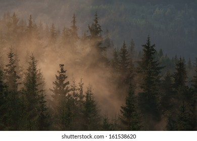 Foggy forest in the early morning - mist among the trees. Coniferous forest with spruces.