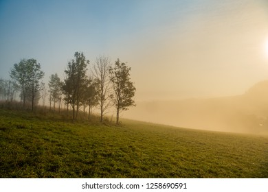 Foggy forest edge