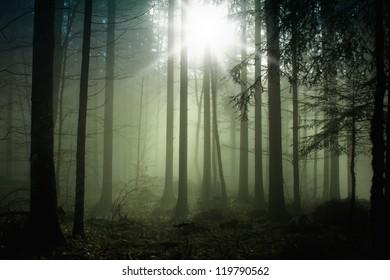 Foggy forest with magic sun light.