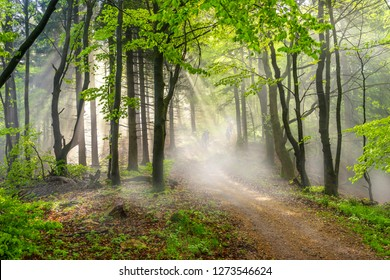 Foggy forest in the morning sun, people running along a path