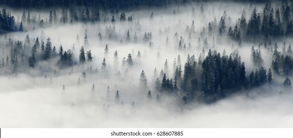 foggy forest mountain