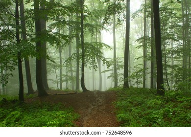 Foggy forest in mountains