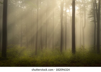 Foggy forest with a mystic feel