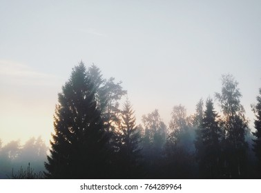 foggy forest in the nature