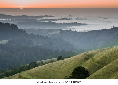 Foggy Forest and Ocean Sunset of Santa Cruz Mountains. Russian Ridge Open Space Preserve, San Mateo County, California, USA.