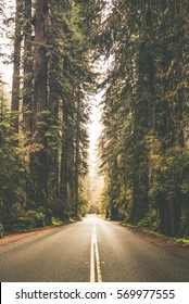 Foggy Forest Road Trip Vertical Photo. California Redwood Forest, United States of America.
