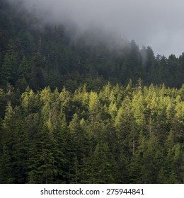 Foggy forest, Skeena-Queen Charlotte Regional District, Haida Gwaii, Graham Island, British Columbia, Canada
