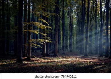 Foggy forest at sunrise