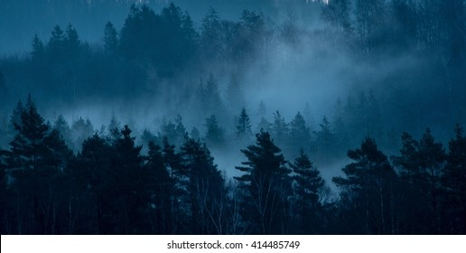 Foggy forest Sweden west coast