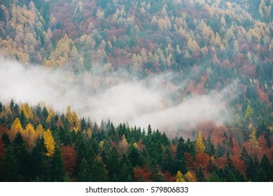 Foggy forested mountain slope shrouded in mist in a scenic landscape view