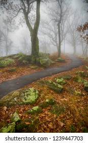 Foggy hiking trail on mountaintop during autumn