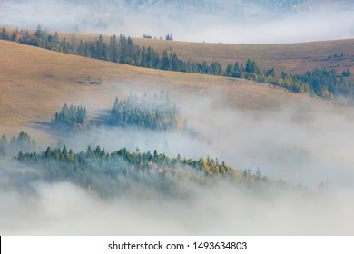 Foggy hills landscape with fir forest in Mountains valley - autumn season