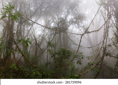 Foggy jungle in the Chiang dao mounts, Thailand