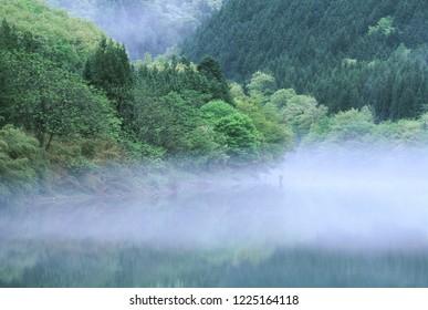 Foggy lake and fresh green