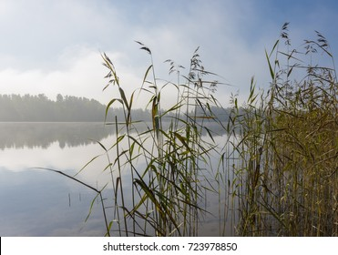 Foggy lake scenery in september