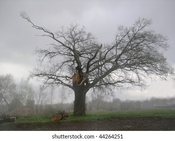 Foggy landscape with broken oak