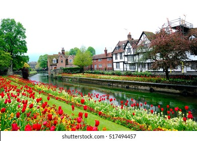 Foggy landscape of Canterbury with blooming tulips and traditional houses along the canal, England, UK