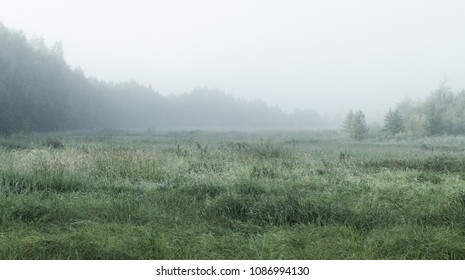 Foggy Landscape With Forest And Field