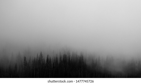 Foggy landscape of forest; Forest with foggy weather