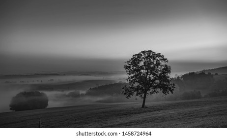 Foggy landscape with lonley tree