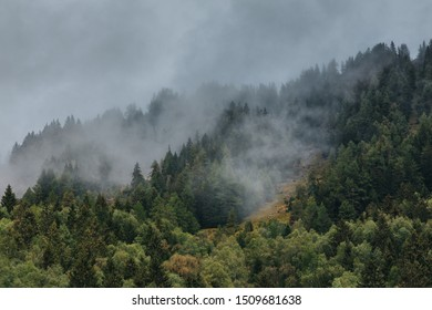 Foggy landscape in the morning with pine trees.
