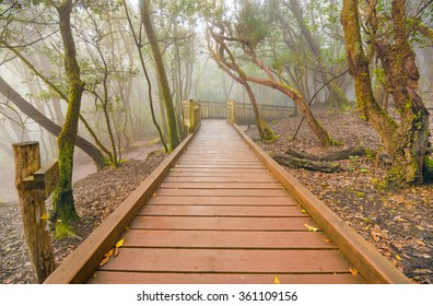 Foggy laurisilva forest in Anaga mountains, Tenerife, Canary island, Spain.
