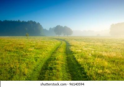 Foggy meadow at sunrise