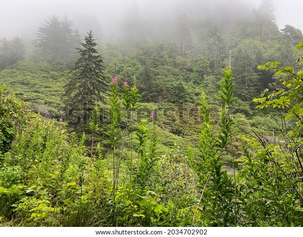 a foggy mist over bright lush evergreen forest with blooming wild flowers