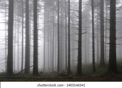 The foggy and misty forest