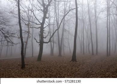 foggy misty forest landscape