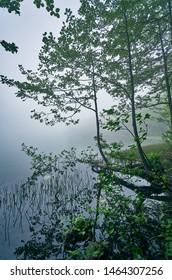 Foggy and misty lake landscape. Taken at Borcka Karagol, Artvin, Black Sea / Karadeniz region of Turkey.