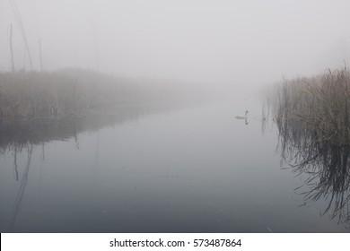Foggy misty landscape