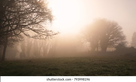 A foggy misty morning in rural Ireland
