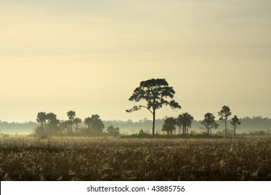 A Foggy Morning in Big Cypress, South Florida