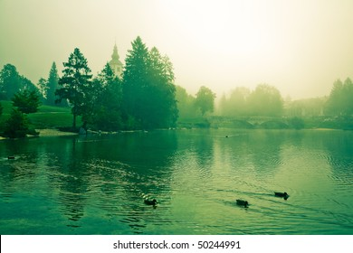 Foggy morning  by Lake Bohinj - Slovernia. Cross processed.
