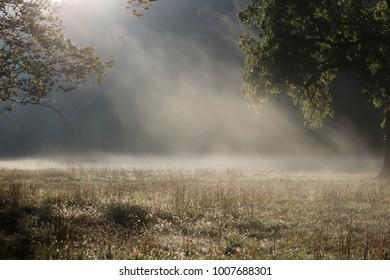Foggy morning highlights